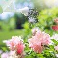Эксперт назвал золотые правила полива в жару. Их должен соблюдать каждый садовод