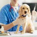 Riigi toel vaktsineeriti 21 500 lemmiklooma