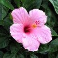 ФОТО | 5 неприхотливых растений для идеального палисадника
