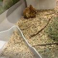 Скончавшийся кролик