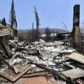 Экологи: в пожарах в Австралии погибли более миллиарда животных