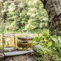 RETSEPT | Kuidas teha eriti head ja vitamiinirikast kuusevõrsesiirupit