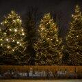 ФОТО: В Кристийне перед праздниками украсили только живые деревья