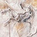 <em>Archaeopteryx</em>