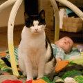 Kass ja beebi