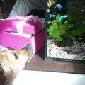 Tere tulemast uus kodu ja akvaarium!