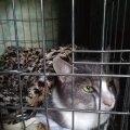 Владелец попавшей под автомобиль кошки отказался оплачивать ее лечение