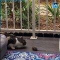 Kass uudistamast rõdule tunginud hiirt