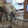 Eestlane Kenyas: elanike arvates oli ostukeskuse ründamine terrorismiakt, mitte usuküsimus