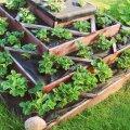 Puidust servadega maasikatorne saab kasutada mitu aastat.