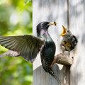 Vanarahva tarkus: Kevadel tuleb võtta linnupetet