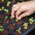 Советуют специалисты: Рекомендуемые дни посева овощей весной 2021 года