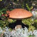 Kus asuvad Eesti parimad seenekohad?
