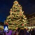Tallinna jõulukuusk