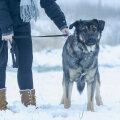 KODULEIDJA   Kas petlik esmamulje, omapärane olek ja paar kiiksu saavadki sellele koerale saatuslikuks?