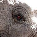 Vesi elevantidele