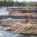 Metsaomanike tulu on tihumeetri kohta männipalki müües umbes 8,60 eurot, männipeenpalki 9,90, kuusepalki 12,35 ja kuusepeenpalki müües aga 13,35 eurot väiksem.