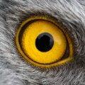 Lindudel aitab magnetvälja tajumine oma rännetel orienteeruda.