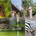 Kust on küll pärit need eksootilised olendid? Loe ja saa teada!