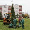 FOTO: Mustamäele istutati statsionaarne jõulupuu