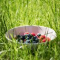 Eesti looduses ja aedades leiduvad supertoidud, mis võiksid igal toidulaual domineerida