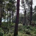ФОТО | В Клоога прошел смерч? Стихия разметала деревья, как щепки