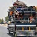 Афганские военные сотнями бегут в Таджикистан, спасаясь от талибов