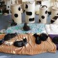 VIDEO ja FOTOD   Mustamäel asuv Eesti suurim vabatahtlike poolt juhitav varjupaik üllatab 191-liikmelise kassiperega