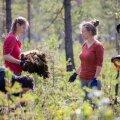 Eestimaa Looduse Fondi soode taastamise tööd aitavad Eestil jõuda lähemale eesmärgile: taastada 11 000 hektarit sooalasid.