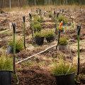 Достойное завершение рекордного сезона: в государственном лесу начались осенние посадки