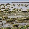 Kas pingutused Läänemere päästmiseks on läbi kukkunud? Värske uuring selgitab