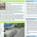 Eestikeelses Vikipeedias valmis 100 000. artikkel
