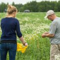 Mehis Puusepp näitab Maalehe ajakirjanikule, kuidas inimesed tema põllul herneid korjamas käivad