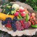 Lindude jooginõus püüavad pilku eri värvi viljad.