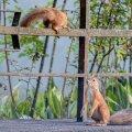 Oravapaarike vallatles sünnitusmaja juures