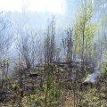 Viljandimaal põles pool hektarit raiesmikku ja metsaalust.