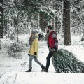 Võimaluse korral tooge jõulupuu metsast.