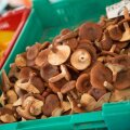 Iga nädalaga suureneb turgudel seente valik.