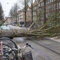 Hollandis peatas torm rongiliikluse, ajutiselt suleti Amsterdami lennuväli