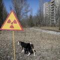 Вольные собаки Чернобыльской зоны и их новые друзья