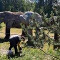 LUGEJA VIDEO | Tallinna loomaaias mängivad elevandid palli