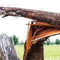 Tormiga murdunud puust on kahju igal aastaajal