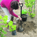 Viinapuu istutamine