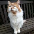 В Британии умер самый старый кот в мире. Он немного не дожил до 32 лет
