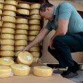 В Оренбурге уничтожают сыр.
