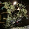 Torm murdis Rootsis puid loogu ja üle 60 000 majapidamise jäi elektrita