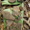 Valik  huumuskihist leitud arvukatest potikildudest ja keraamika tükkidest.  Nende rohkus viitab pikaajalisele ja tihedale asustatusele.