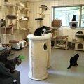 ВИДЕО | Таллиннский приют для животных: Каждый день пристраиваем одну кошку и одну собаку точно