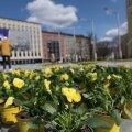 ФОТО | С Днем Европы! Площади городов Эстонии покрылись цветочными коврами