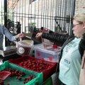 ВИДЕООПРОС DELFI: В эстонской клубнике нашли запрещенные химикаты. Какую клубнику теперь предпочитают покупатели?